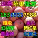 辽宁本溪膜袋红富士苹果价格分析