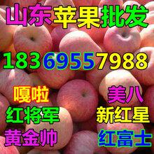 四川广元美国八号苹果基地图片