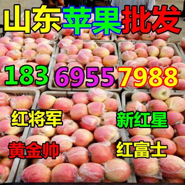 凌源红富士苹果价格行情分析