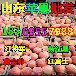 浙江湖州纸夹膜红富士苹果批发