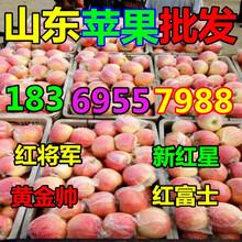 陕西延安纸袋红富士苹果价格行情图片