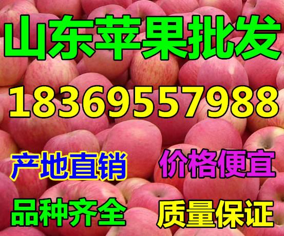 山东省莱芜市纸袋红富士苹果产地报价