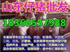 广东中山今日20斤猪仔价格