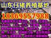 广东茂名今天仔猪价格行情