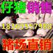 南川20公斤苗猪价格是多少