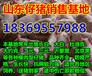 广东中山猪仔价格上涨的原因