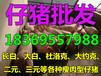 广东肇庆苗猪价格