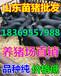 广东佛山小猪价格行情分析