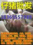凤城三元仔猪价格是多少图片