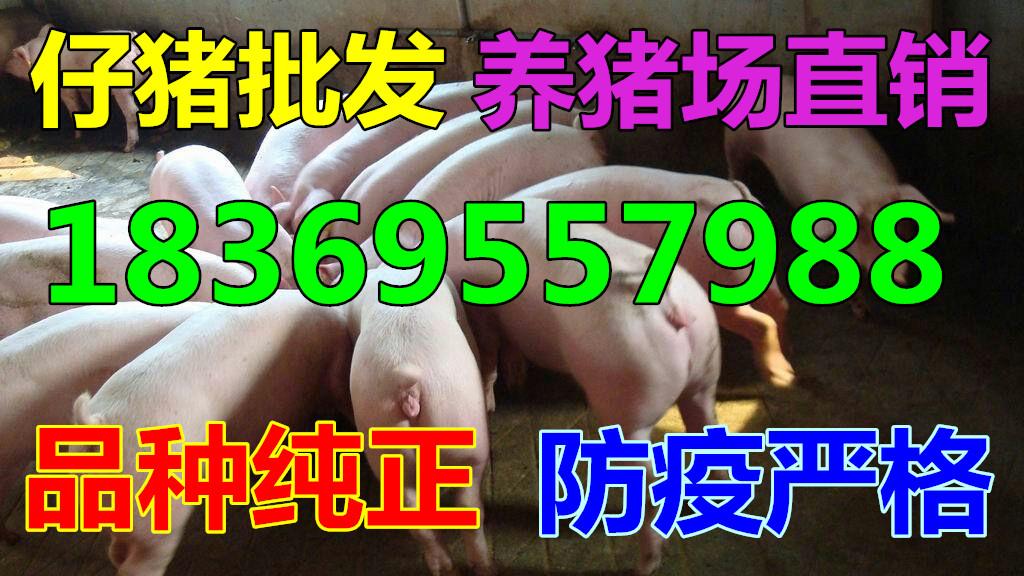 丹阳猪崽批发市场