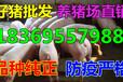 贵州贵阳大白仔猪批发市场