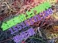 苏州电缆回收兴发马上揭秘.揭示苏州废旧电缆回收正规报价图片