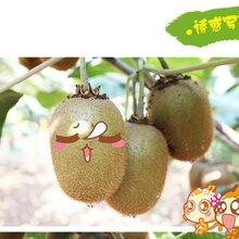 陕西宝鸡眉县猕猴桃奇异果秦岭山下自家种地徐香猕猴桃图片
