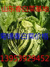 山东春白菜批发市场大白菜价格图片