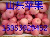 山东红星苹果批发价格红星苹果产地价格介绍