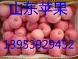 常德纸夹膜红富士苹果低价供应