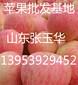 吉林膜袋红富士苹果批发价格
