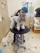 重庆宠物美容培训学校,重庆思蒙宠物美容学校
