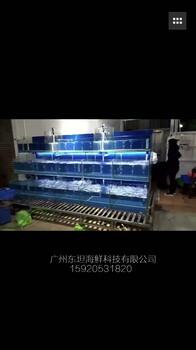 广州罗冲围上门设计海鲜鱼池,白云区富力定做小区生鲜店海鲜缸,定做活海鲜天主福音特码报鱼池