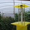 佳多農業頻振式殺蟲燈在棉田害蟲治理中的應用