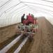 最新型大棚土豆种植播种机单垄土豆播种机