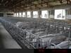 天津限位栏6-2.1限定母猪自由减少流产率福宇养猪设备有限公司