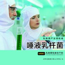 批发唾液乳杆菌益生菌乳酸菌保健品台湾进口亚芯品牌
