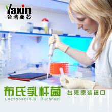 布氏乳杆菌乳酸菌粉益生菌包被冻干粉台湾亚芯品牌
