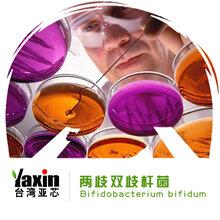 两歧双歧杆菌益生菌冻干粉乳酸菌保健品原料台湾亚芯品牌