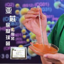 屎肠球菌乳酸菌饲料添加剂益生菌微生态活菌制剂亚芯品牌