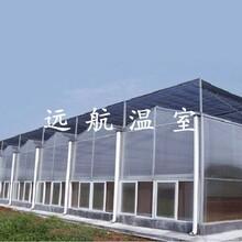 山东几字钢温室,玻璃温室,鸡鸭等养殖大棚生产厂家