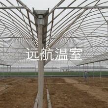 山东青州市远航玻璃温室
