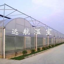 青州远航温室大棚