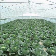 青州市远航温室鸡鸭等养殖温室