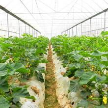 青州市远航温室工程,连栋温室