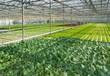 青州市遠航溫室,溫室大棚