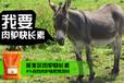 养驴基地如何给肉驴育肥