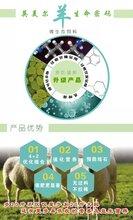 羊催肥饲料、牛羊饲料图片