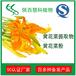 黄花菜提取物慧科厂家供应品质保证现货包邮黄花菜粉