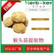 猴頭菇提取物慧科廠家直銷品質保證現貨包郵猴頭菇多糖30%