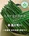丰岛2号f1-高产芦笋种子,新品种芦笋种子,