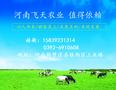 河南飞天厂价直销喷浆玉米皮、高档动物饲料原料、保毒素牛羊饲料原料图片