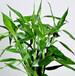 武汉办公室水培植物富贵竹转运竹盆栽,富贵竹花?#23458;?#22478;送货上门