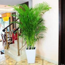 武漢辦公室園林綠化植物出租,提供寫字樓花卉盆栽盆景