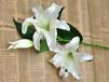 武汉花卉大型市场供应百合鲜花,可送货的空运鲜百合花售价3.5元
