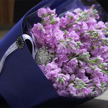 武汉大型花卉市场供应紫罗兰鲜花,各类型的鲜花支持省内物流发货