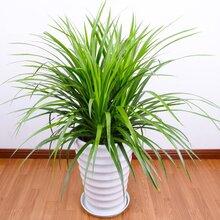 武汉写字楼室内花卉盆栽租赁,武汉户外花卉绿植施工养护