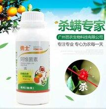 柑橘红蜘蛛防治方法效果好的杀螨剂有哪些柑橘类红蜘蛛杀螨剂