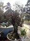 合肥圆林绿化工程设计施工;花卉苗木出售买卖租凭礼品花束买卖图片