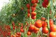 东莞蔬菜配送公司教你怎样看待的蔬菜安全系数